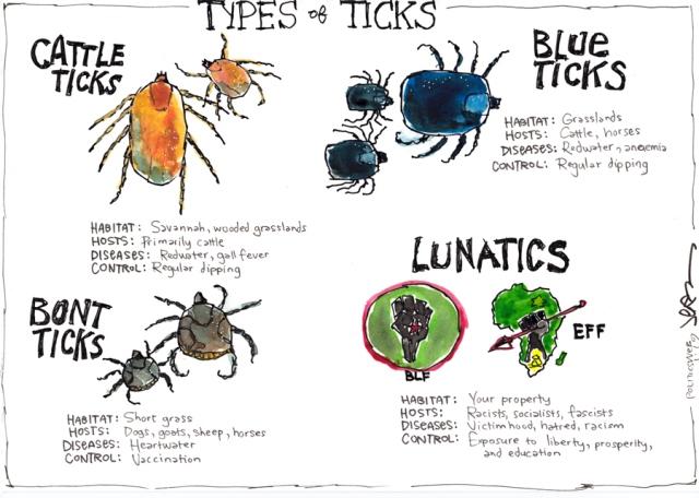 Types of ticks - ARCHIVE Politicsweb