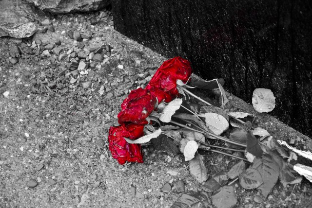 Roses at Auschwitz Birkenau Concentration Camp