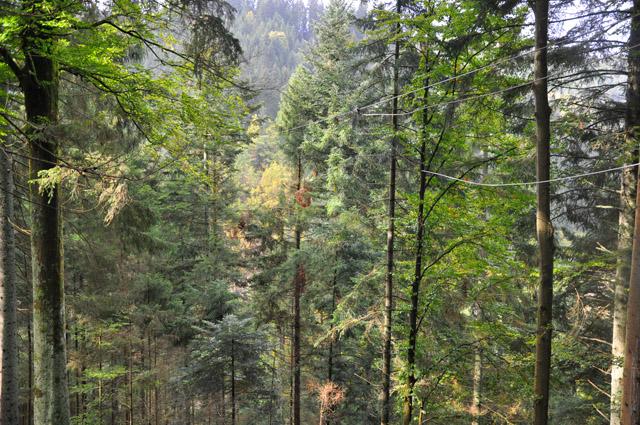 Ziplines Black Forest