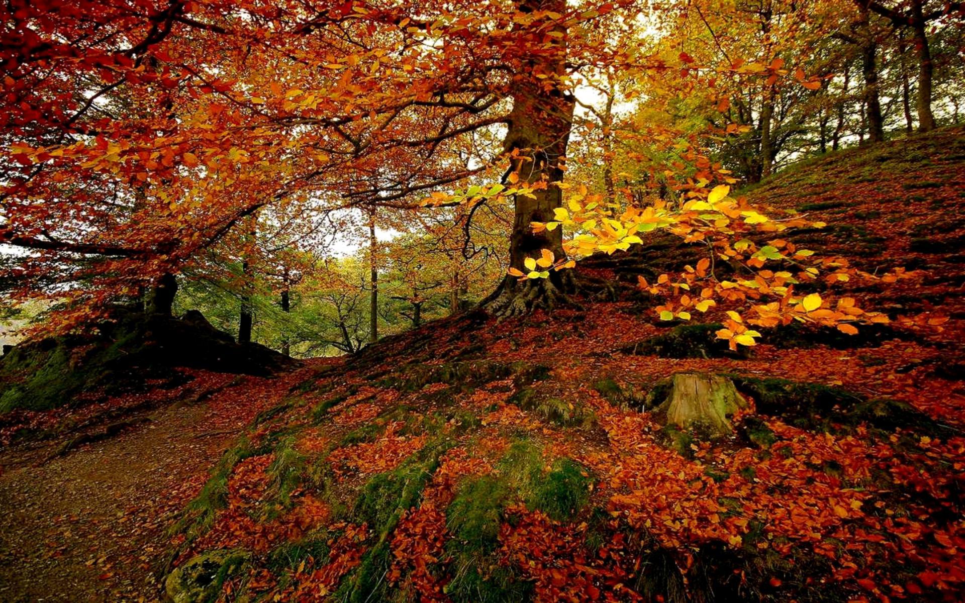 Autumn Fall Wallpaper 1600x900 Sfondi Desktop Natura Download Gratis