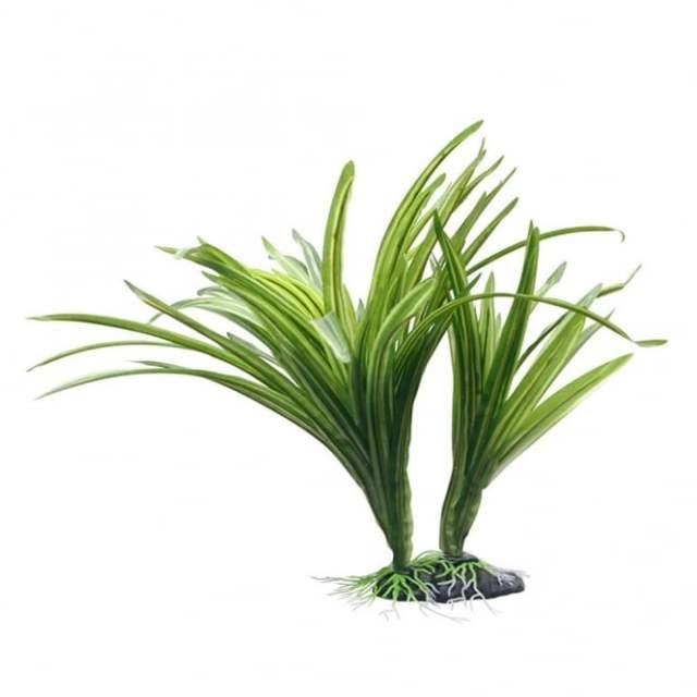 Fluval Striped Acorus Plant 25cm   Fluval from Pond Planet Ltd UK
