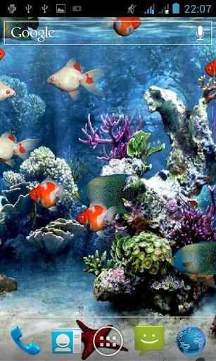 Clown Fish Wallpaper Iphone 6 Plus Live Aquarium Screensaver For Android Free Download