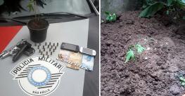 Rapaz é preso com dois pés de maconha e arma na região central de Pinda