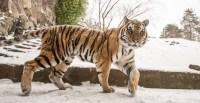 Oregon Zoo Animals Have Snow Days