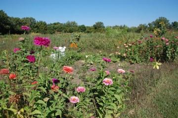 garden-plot-webDSC_9317