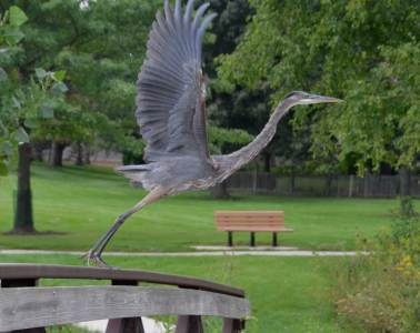 heron-taking-off