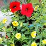 Container Gardening Tips + Duluth Trading Co. Giveaway