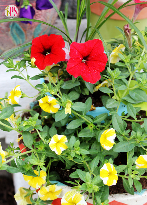 Container Gardening Tips from Positively Splendid