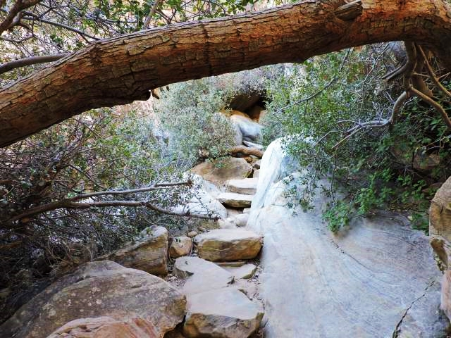 lost-creek-canyon-trail-tree-07