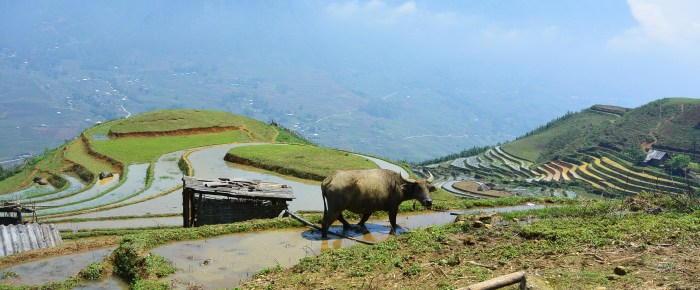 Hiking in the mountains of Sapa
