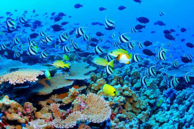 Great_Barrier_Reef_Biodiversity Top 10 Places to Visit Next Year!