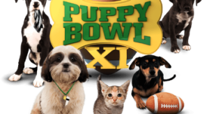 Top 10 Facts You Don't Know about Puppy Bowl