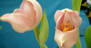 Top 10 Funny Flowers That Make You Smile :)