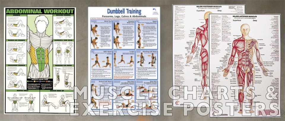 Muscle Charts and Exercise Posters - Educate and improve safety with