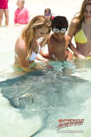 Stingray feeding