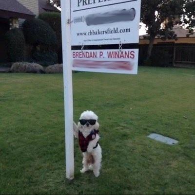 Dog Realtor