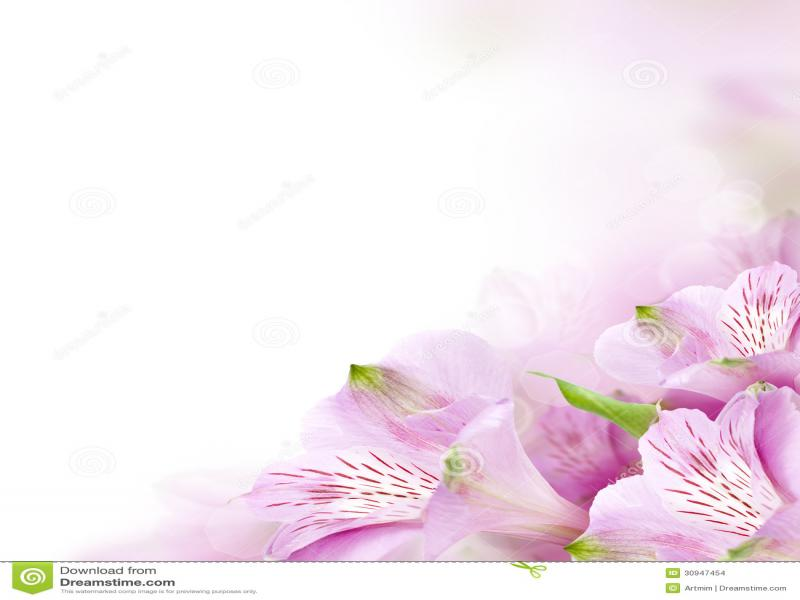Cute Teal Wallpapers Flower Border Design Backgrounds For Powerpoint Templates