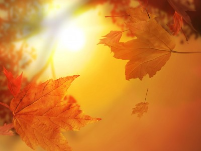 Fall Leaves Wallpaper Powerpoint Background Autumn Leaves With Sunlight Free Ppt Backgrounds For Your