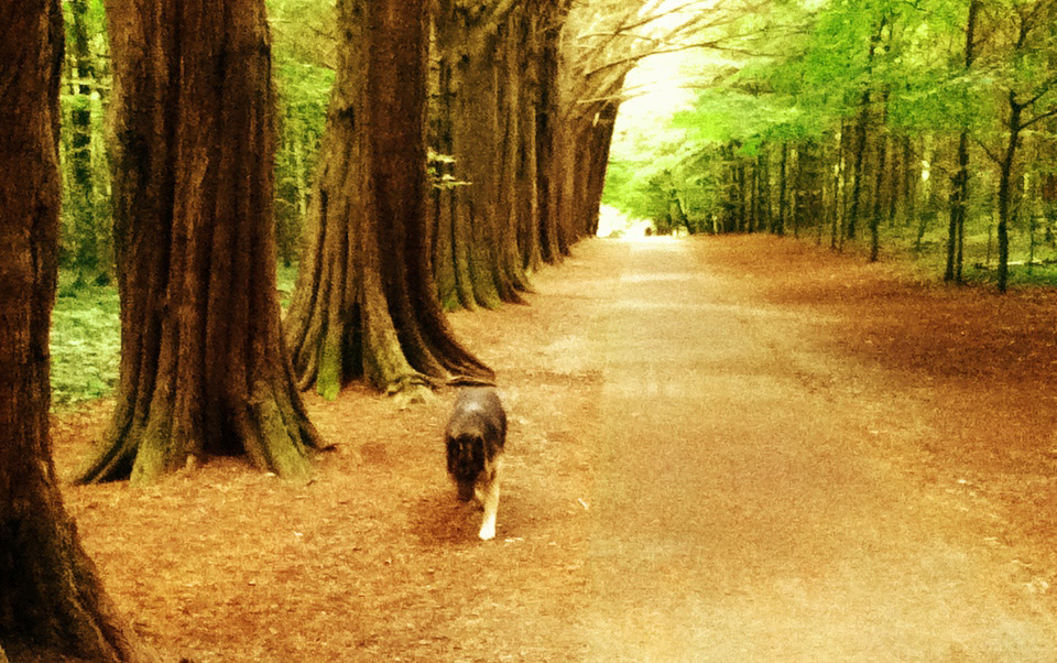 Dog walking in woodlands - illustrating an article about beating writers block