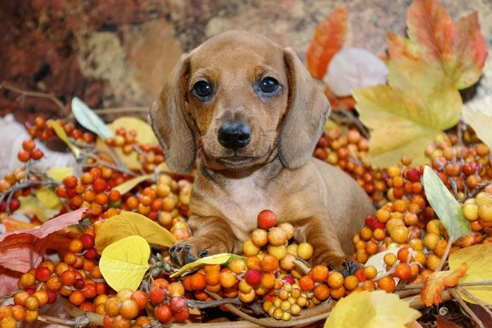 Maine Fall Wallpaper Blog Practical Paw The Dog Lovers Toolkit