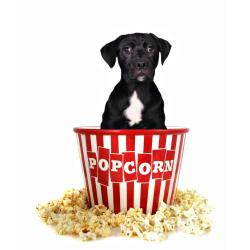 Small Crop Of Can Dogs Have Popcorn