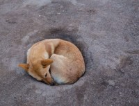 How to stop a dog from digging - fixing a hole - Practical ...
