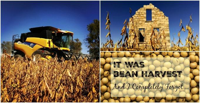 Bean Harvest Slider