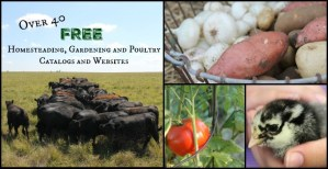Over 40 FREE Homesteading, Gardening and Poultry Catalogs and Websites