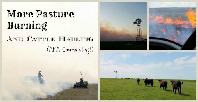 cattle fire slide