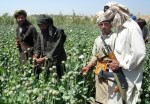 Afghans Talibans in poppy field(Source of opium)