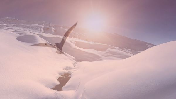 Bird flying through snowy mountains