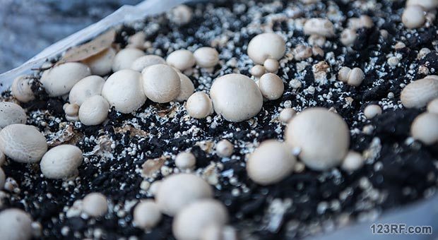 How to Start a Mushroom Farm