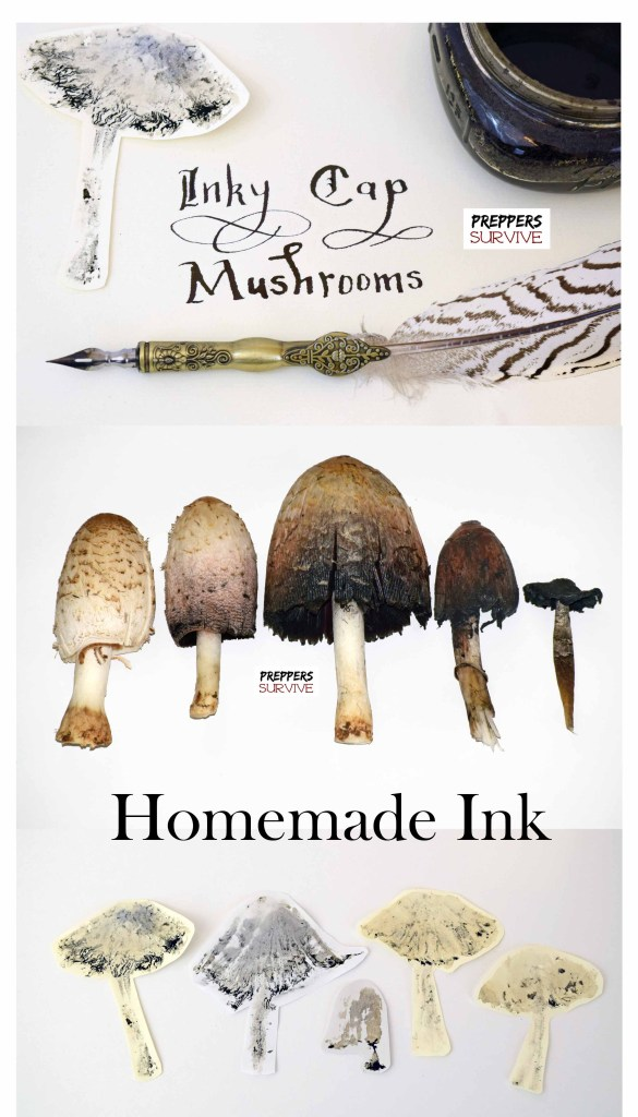 Homemade ink is so easy! Learn the Ink Making Process using Shaggy Mane Mushrooms