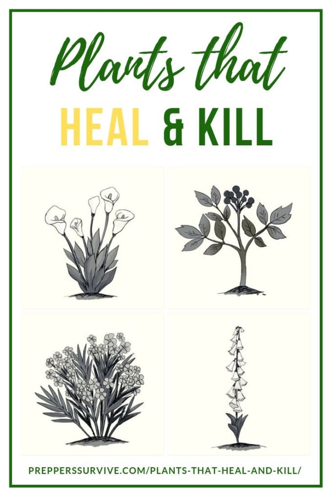 Plants That Heal And Kill