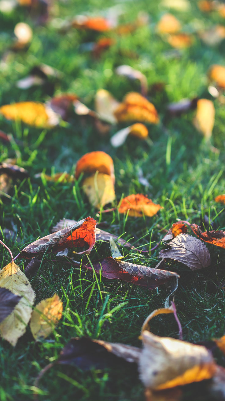 How To Make A Wallpaper App For Iphone 8 Free Autumn Inspired Iphone 7 Plus Wallpapers Preppy