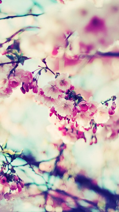27 Floral iPhone 7 Plus Wallpapers for a Sunny Spring | Preppy Wallpapers