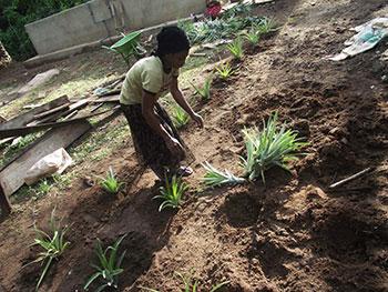 Smallholders-Foundation-350