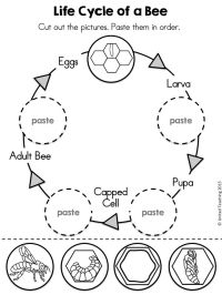 Search Results for Plant Life Cycle Worksheet  Calendar ...