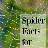 20 Fun Spider Facts for Preschoolers