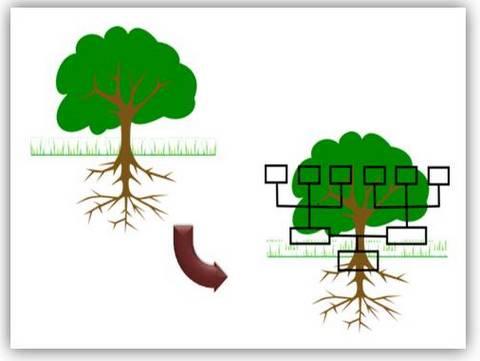 5 Creative Powerpoint Tree Diagrams