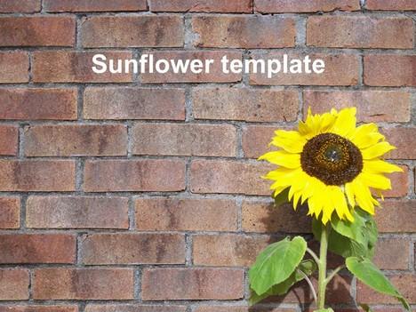 Black And White Polka Dot Wallpaper Border Sunflower Powerpoint Template 2
