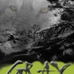 Book Review: Gray