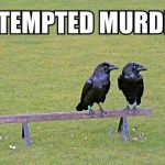 Monday Morning Laughs: Attempted Murder
