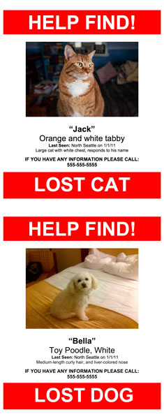 Lost Pet Poster Template - missing pet template
