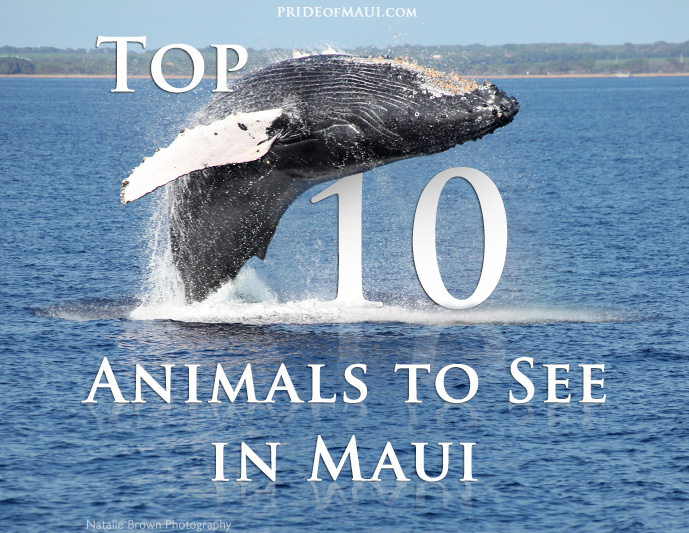 Top 10 Animals to See in Maui