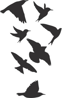 Birds Wallpaper Decal Sticker - Black Bird Decals - Bird ...