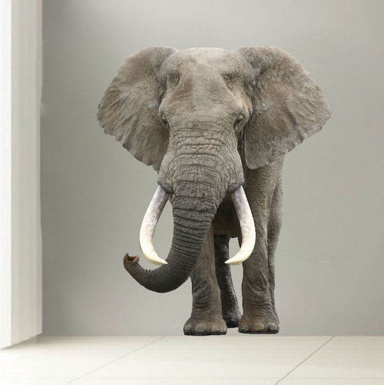 3d Wallpaper For Home Wall Price In India Elephant Wall Mural Decal Animal Wall Decal Murals
