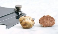 White Truffle. - Photo from Tuber.it