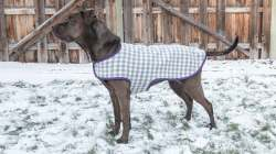 Small Of Dog Coat Pattern