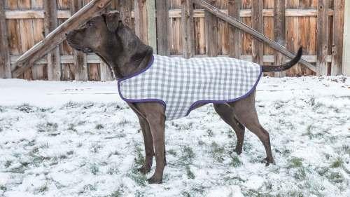 Medium Of Dog Coat Pattern